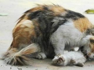 Kisah sang Kucing dan Ibu sakit